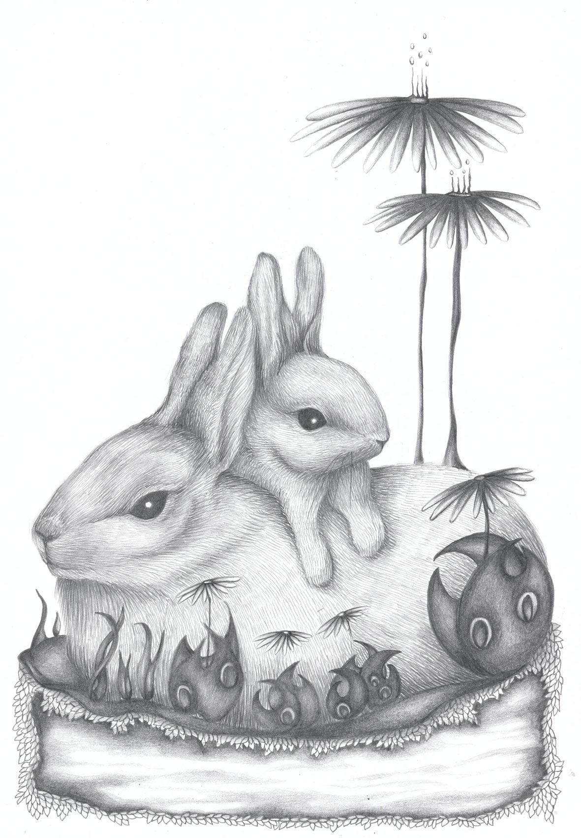 Conejos-web.jpg